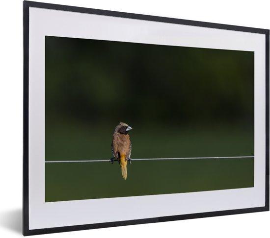 Foto in lijst - Bruin libelvinkje op een draad fotolijst zwart met witte passe-partout klein 40x30 cm - Poster in lijst (Wanddecoratie woonkamer / slaapkamer)
