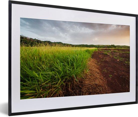 Foto in lijst - Gezond citroengras groeit wild op het platteland van Jamaica fotolijst zwart met witte passe-partout 60x40 cm - Poster in lijst (Wanddecoratie woonkamer / slaapkamer)