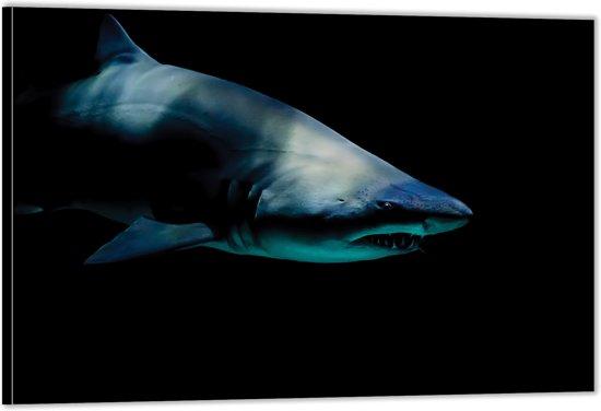 Dibond – Gevaarlijke Haai– 60x40 Foto op Aluminium (Wanddecoratie van metaal)