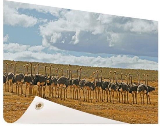 Kudde struisvogels fotoafdruk Tuinposter 60x40 cm - Foto op Tuinposter / Schilderijen voor buiten (tuin decoratie)