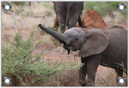 Tuinposter –Vrolijke Kleine Olifant– 90x60 Foto op Tuinposter (wanddecoratie voor buiten en binnen)