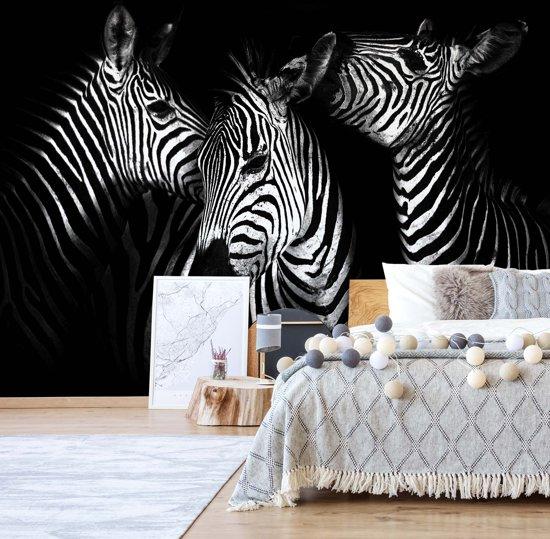 Fotobehang Black And White Zebras | V8 - 368cm x 254cm | 130gr/m2 Vlies