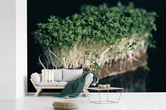 Fotobehang vinyl - De groene tuinkers met een zwarte achtergrond breedte 540 cm x hoogte 360 cm - Foto print op behang (in 7 formaten beschikbaar)