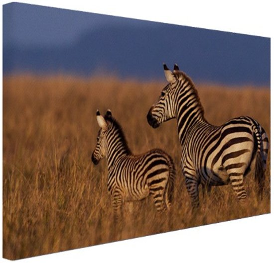 Bol moeder en baby zebra canvas 120x80 cm foto print op moeder en baby zebra canvas 120x80 cm foto print op canvas schilderij wanddecoratie thecheapjerseys Gallery