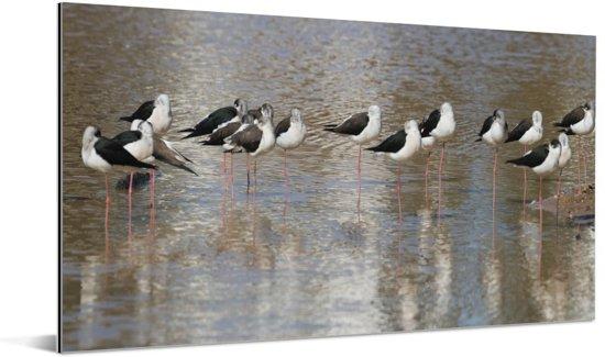 Panorama van stelkluten in het water Aluminium 160x80 cm - Foto print op Aluminium (metaal wanddecoratie)