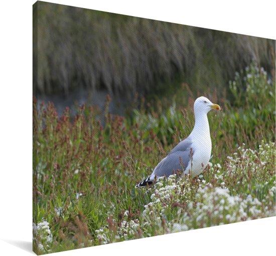 Een Zilvermeeuw die in het gras zit Canvas 120x80 cm - Foto print op Canvas schilderij (Wanddecoratie woonkamer / slaapkamer)