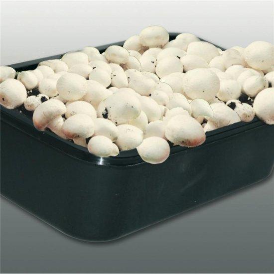 Kweekset witte champignons 3 L