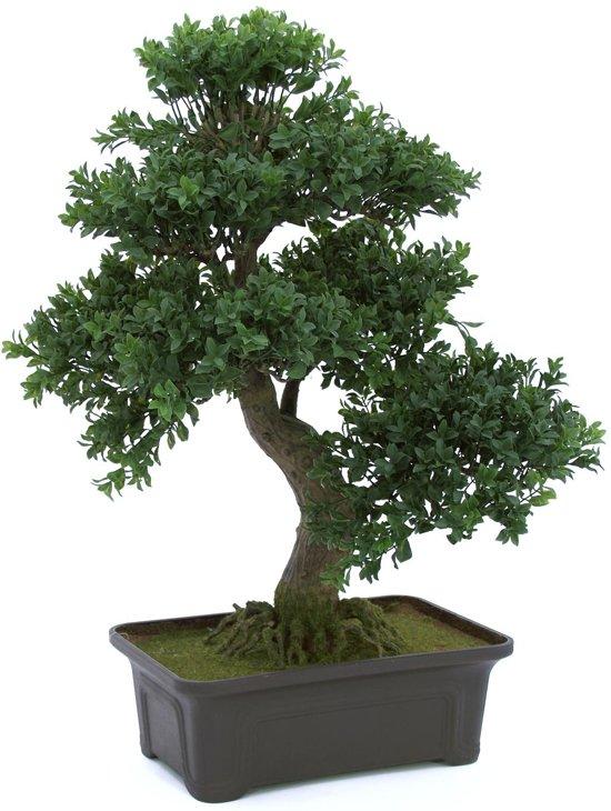 Bonsai Voor Binnen.Europalms Bonsai Boompje Kunstplant In Pot Hoogte 61 Cm