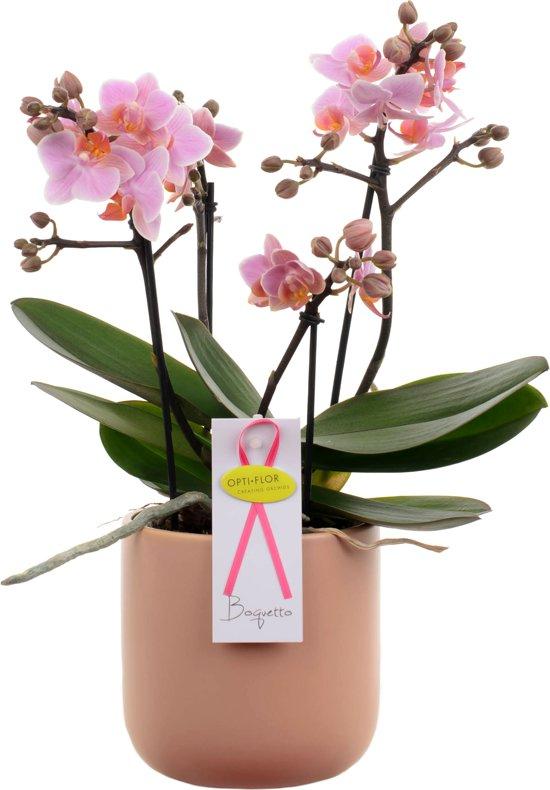 Boquetto Roze Orchidee Cadeau Met Bloempot En Een Persoonlijke Boodschap