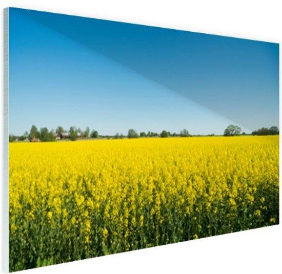 FotoCadeau.nl - Oliezaadveld foto Glas 120x80 cm - Foto print op Glas (Plexiglas wanddecoratie)