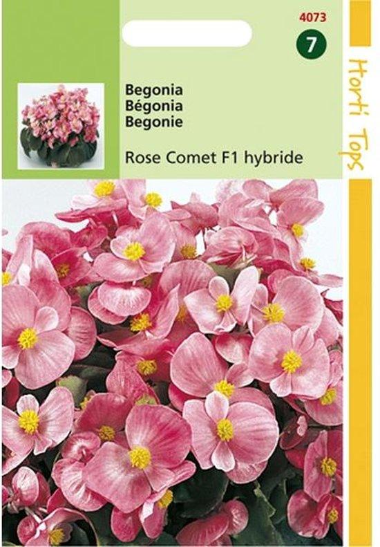 Begonia Rose Comet - Begonia semperflorens - set van 4 stuks