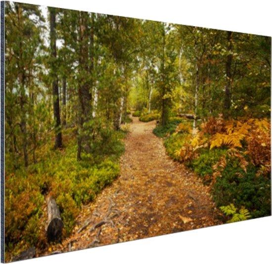 Een bospad vol met bladeren Aluminium 60x40 cm - Foto print op Aluminium (metaal wanddecoratie)