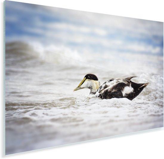 Een eider in het golfschuim Plexiglas 60x40 cm - Foto print op Glas (Plexiglas wanddecoratie)