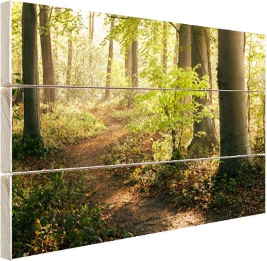 Een bospad verlicht door de zon Hout 160x120 cm - Foto print op Hout (Wanddecoratie) XXL / Groot formaat!