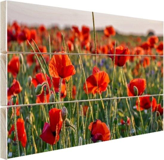 Klaprozen in het veld Hout 160x120 cm - Foto print op Hout (Wanddecoratie) XXL / Groot formaat!