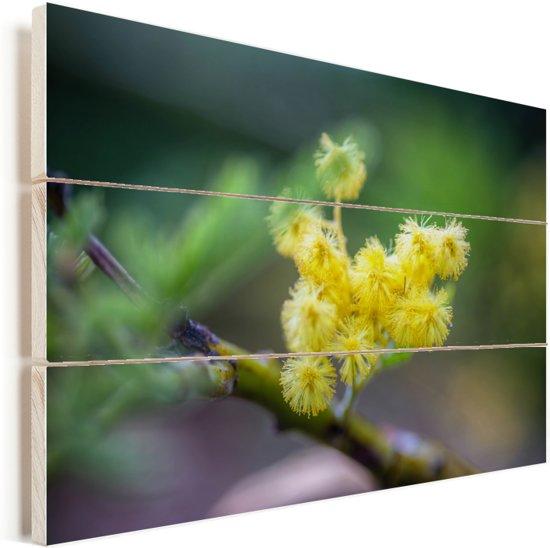 Een kleine mimosabloem met een wazige achtergrond Vurenhout met planken 30x20 cm - klein - Foto print op Hout (Wanddecoratie)