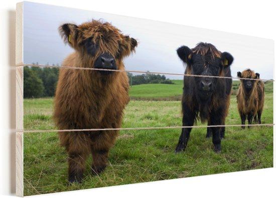 Drie Schotse hooglander kalfjes Vurenhout met planken 120x80 cm - Foto print op Hout (Wanddecoratie)