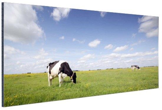 Koeien in een weiland Aluminium 30x20 cm - Foto print op Aluminium (metaal wanddecoratie)