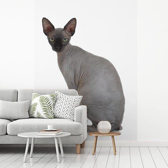Fotobehang vinyl - Grijze Sphynx kat op een witte achtergrond breedte 165 cm x hoogte 220 cm - Foto print op behang (in 7 formaten beschikbaar)