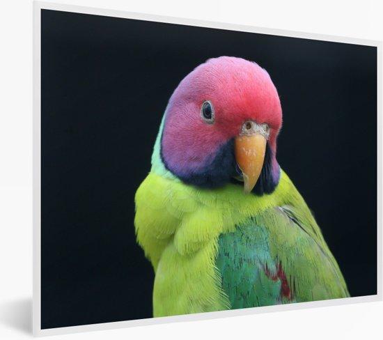 Foto in lijst - Kleurrijke portretfoto van een pruimekopparkiet fotolijst wit 40x30 cm - Poster in lijst (Wanddecoratie woonkamer / slaapkamer)
