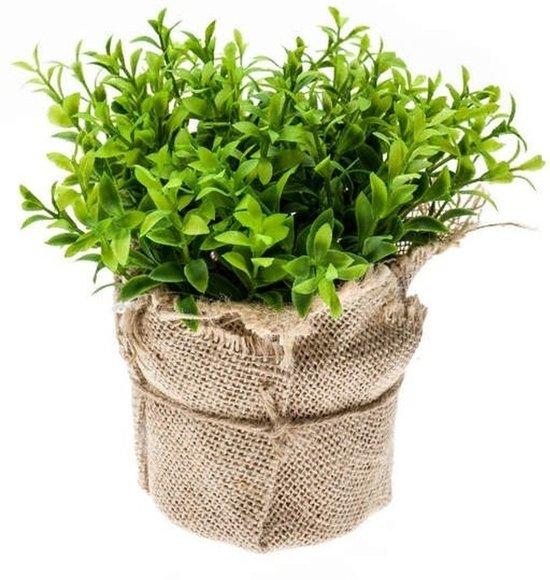 Kruiden In Pot.Kunstplant Tuinkers Kruiden Groen In Pot 16 Cm