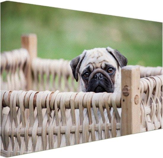 Pup in mandje Canvas 60x40 cm - Foto print op Canvas schilderij (Wanddecoratie)
