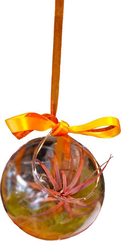 Leuk decoratief plantje in een glazen bol die hangt aan een decoratieve ijzeren standaard.