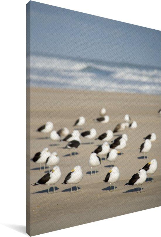 Een groep grote mantelmeeuwen op het strand bij zee Canvas 40x60 cm - Foto print op Canvas schilderij (Wanddecoratie woonkamer / slaapkamer)