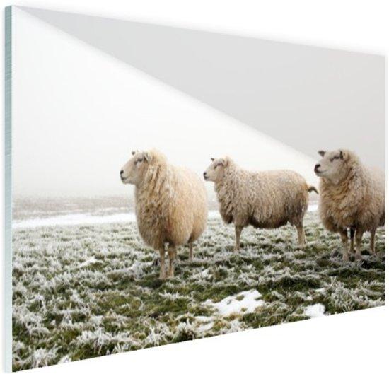 Drie schapen in de winter Glas 90x60 cm - Foto print op Glas (Plexiglas wanddecoratie)