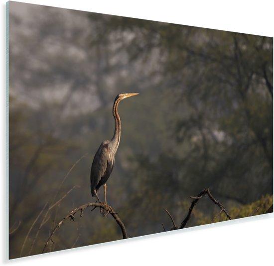 Purperreiger op een tak in het bos Plexiglas 60x40 cm - Foto print op Glas (Plexiglas wanddecoratie)