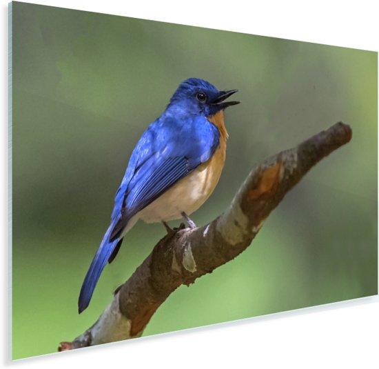 Een Blauwe Vliegenvanger kijkt voor zich uit Plexiglas 180x120 cm - Foto print op Glas (Plexiglas wanddecoratie) XXL / Groot formaat!