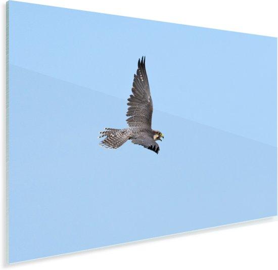 Lannervalk tijdens de vlucht Plexiglas 30x20 cm - klein - Foto print op Glas (Plexiglas wanddecoratie)