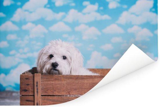 Maltezer hond in een houten doos Poster 90x60 cm - Foto print op Poster (wanddecoratie woonkamer / slaapkamer) / Huisdieren Poster