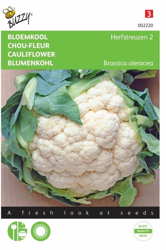 Bloemkool Herfstreuzen 2 - Brassica oleracea - set van 6 stuks