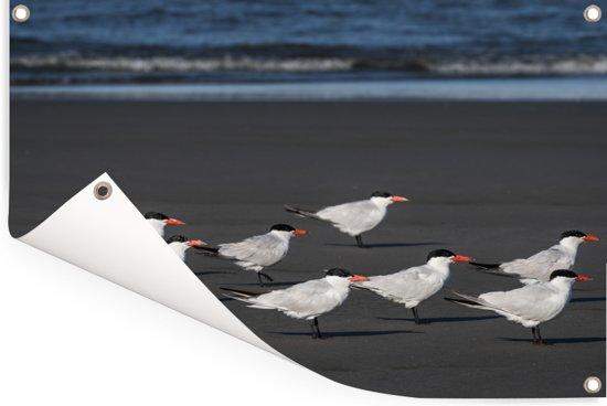 Groep reuzensternen op het strand Tuinposter 120x80 cm - Tuindoek / Buitencanvas / Schilderijen voor buiten (tuin decoratie)