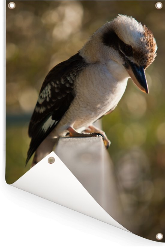 Een kookaburra die zit op een railing Tuinposter 60x90 cm - Tuindoek / Buitencanvas / Schilderijen voor buiten (tuin decoratie)