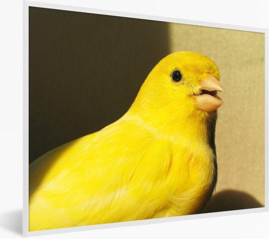 Foto in lijst - Mooie gele kanarie vogel in Barcelona fotolijst wit 40x30 cm - Poster in lijst (Wanddecoratie woonkamer / slaapkamer)