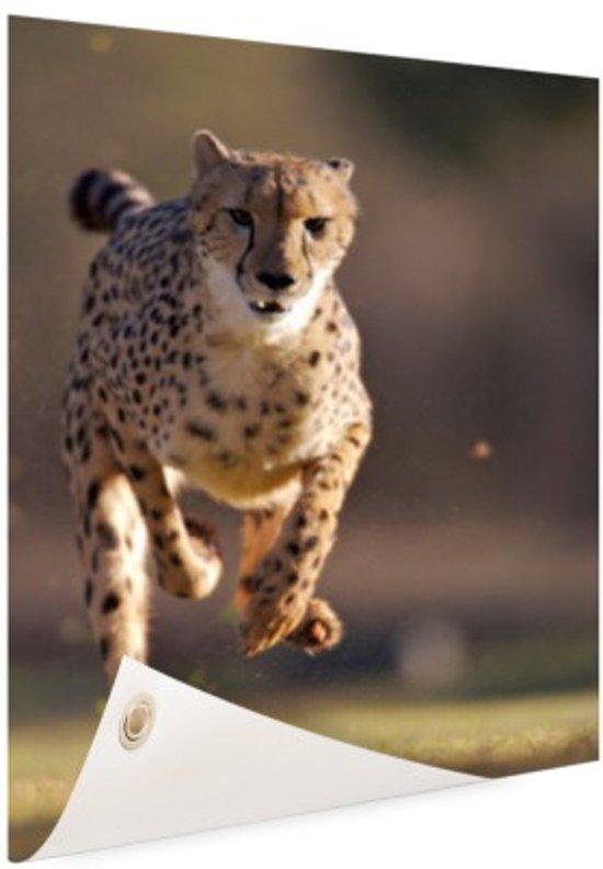 Jagende luipaard foto Tuinposter 100x200 cm - Tuindoek / Buitencanvas / Schilderijen voor buiten (tuin decoratie) XXL / Groot formaat!