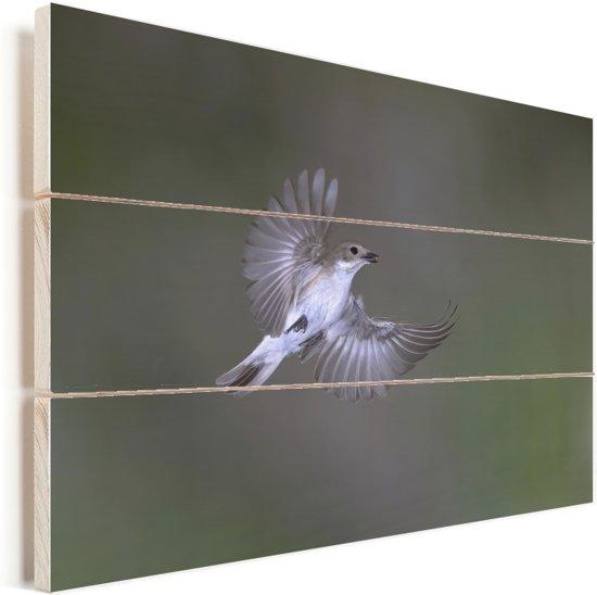 Een bonte vliegenvanger spreidt zijn vleugels tijdens de vlucht Vurenhout met planken 30x20 cm - klein - Foto print op Hout (Wanddecoratie)