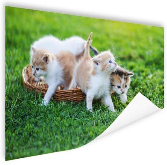 Kittens in de tuin Poster 180x120 cm - Foto print op Poster (wanddecoratie woonkamer / slaapkamer) / Dieren Poster XXL / Groot formaat!