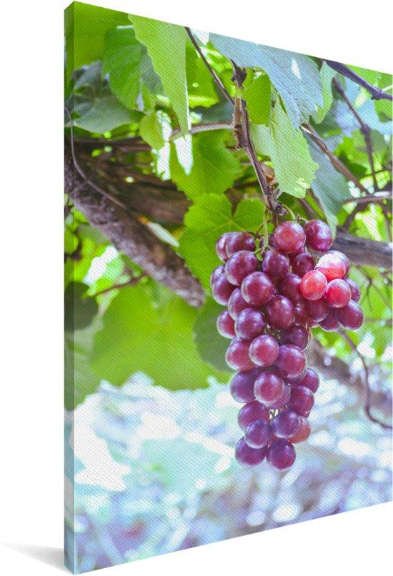 Rode druiven in de wijngaard aan een tak Canvas 80x120 cm - Foto print op Canvas schilderij (Wanddecoratie woonkamer / slaapkamer)