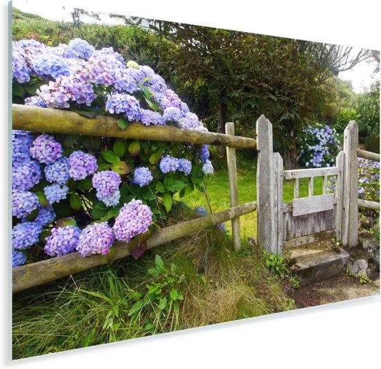 Cottage tuin met hortensia's Plexiglas 60x40 cm - Foto print op Glas (Plexiglas wanddecoratie)