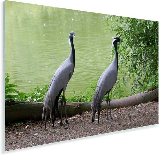 Koppel van jufferkraanvogels Plexiglas 60x40 cm - Foto print op Glas (Plexiglas wanddecoratie)