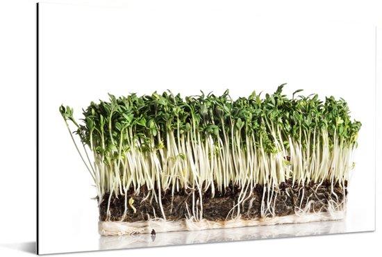 De groene tuinkers rusten tegen een lichte achtergrond Aluminium 120x80 cm - Foto print op Aluminium (metaal wanddecoratie)