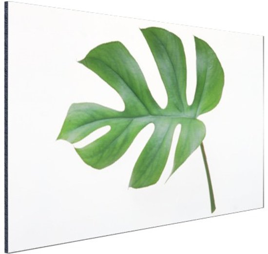 Botanische print blad Aluminium 90x60 cm - Foto print op Aluminium (metaal wanddecoratie)