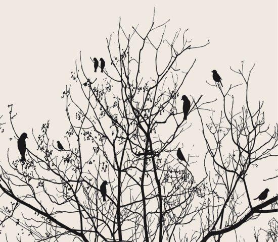 Vogeltjes Behang Lief.Vogeltjes In Boom Fotobehang Xxl 368 X 254 Cm Zwart Wit