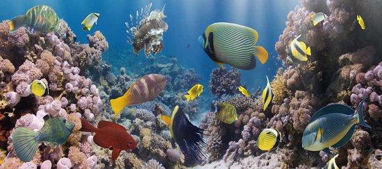 Glas schilderij Tropische vissen XL 60x160