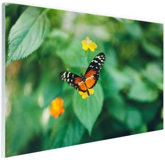 Vlinder op bloem Glas 90x60 cm - Foto print op Glas (Plexiglas wanddecoratie)