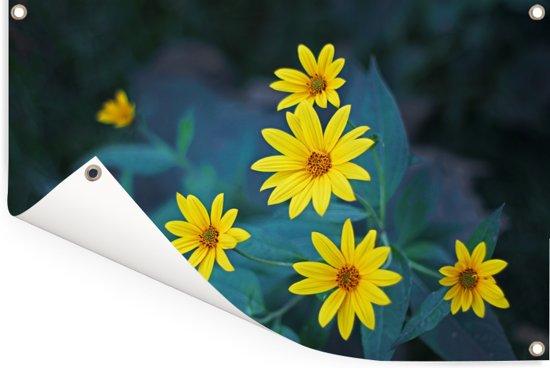 Groep gele bloesems van de aardpeer of de jeruzalemartisjok Tuinposter 90x60 cm - Tuindoek / Buitencanvas / Schilderijen voor buiten (tuin decoratie)