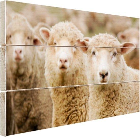 Drie witte schapen Hout 60x40 cm - Foto print op Hout (Wanddecoratie)